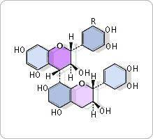oligo-proanthocyanidines pépin de raisin